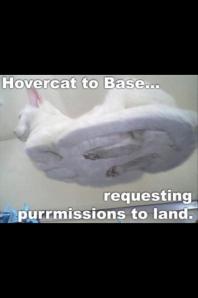 HoverCat